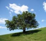 Ten zatracený strom!